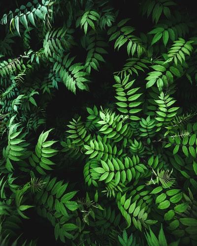 1641. Növények világa