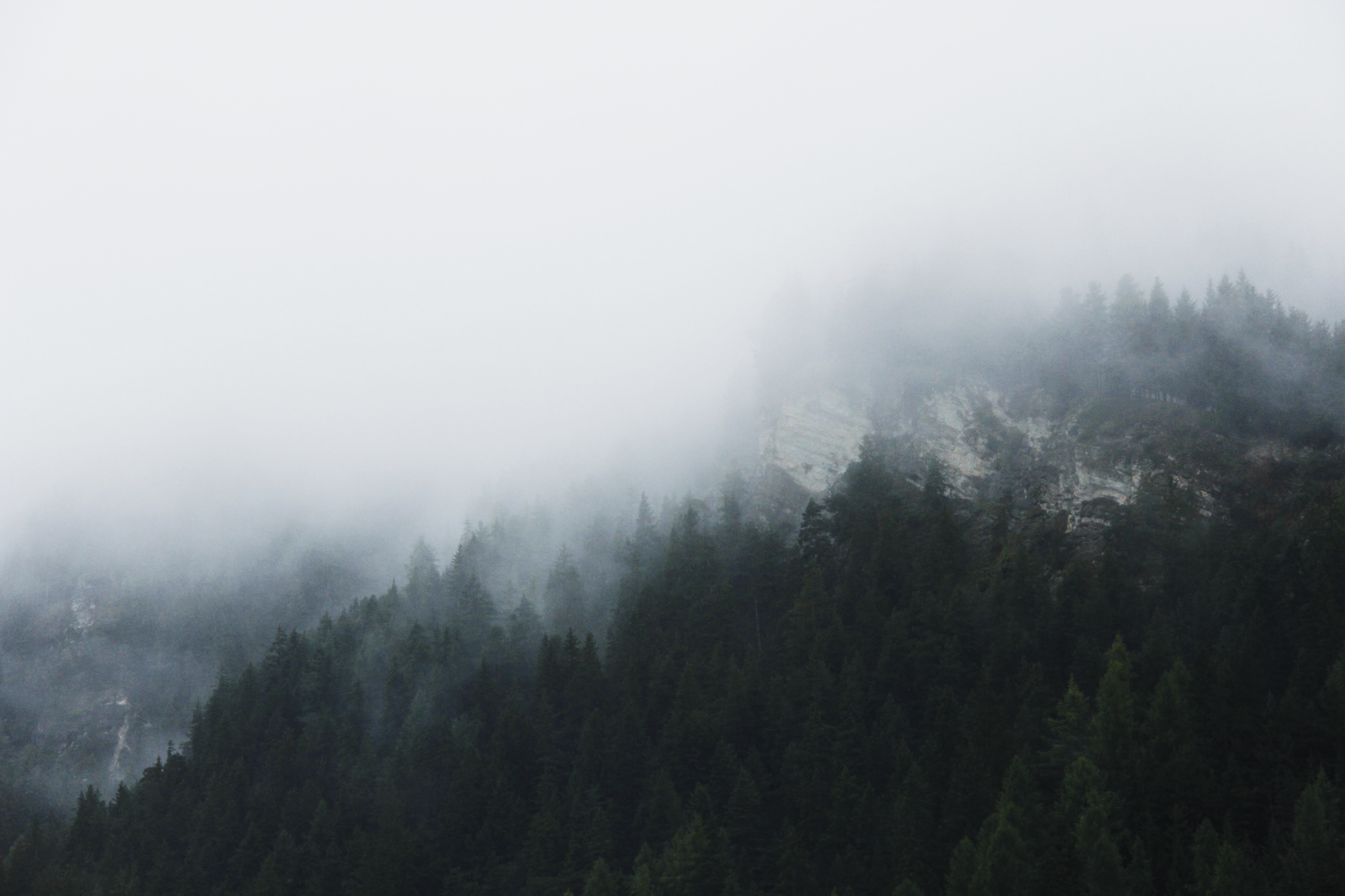 landscape photography of forest with fog