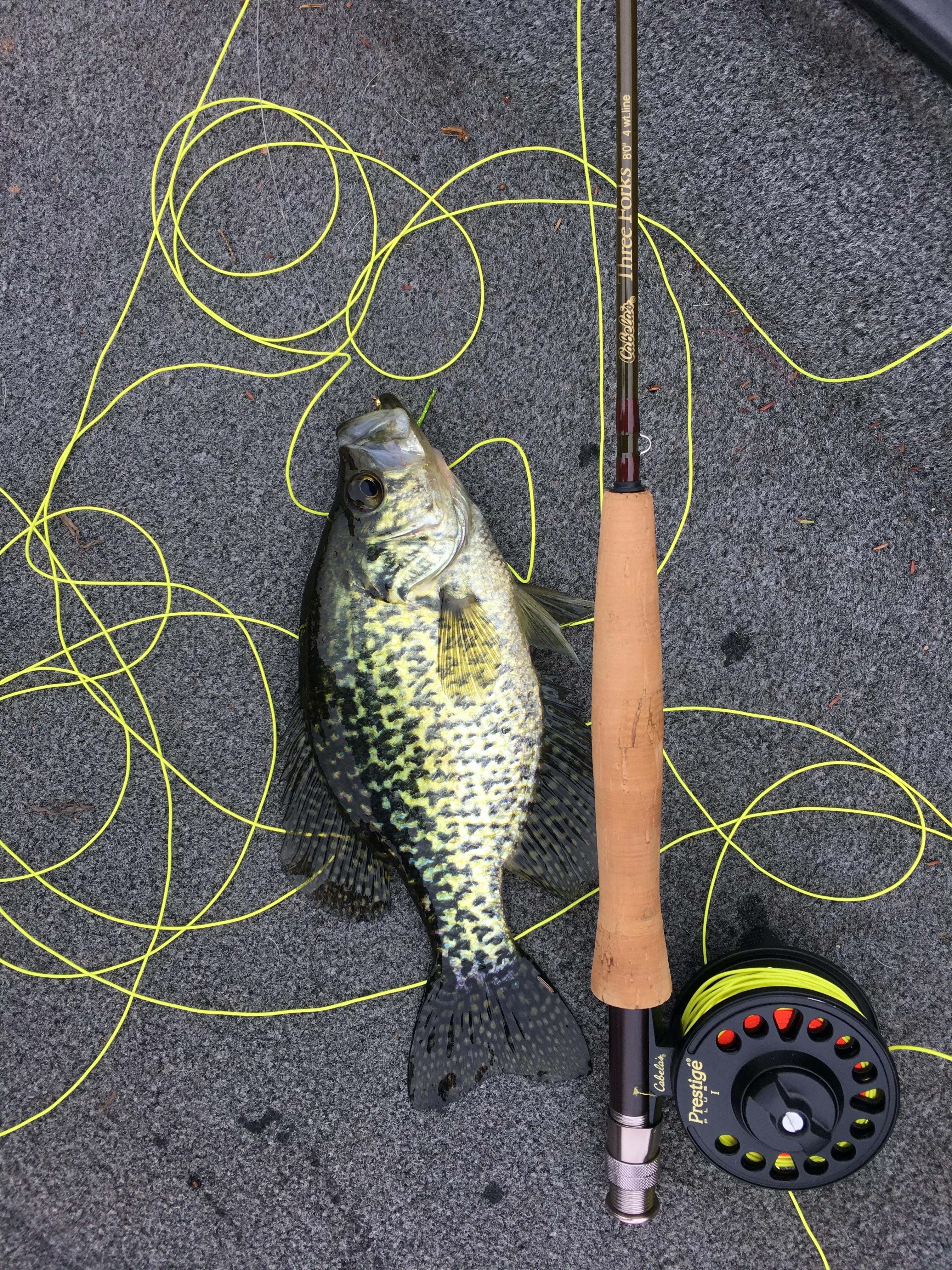 brown bass fish beside rod