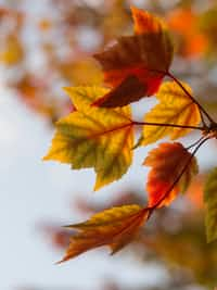 Autumn Equanimity #fallingintoautumn2021 stories