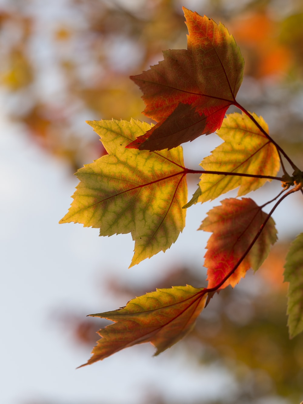 selective focus photography of orange leaves