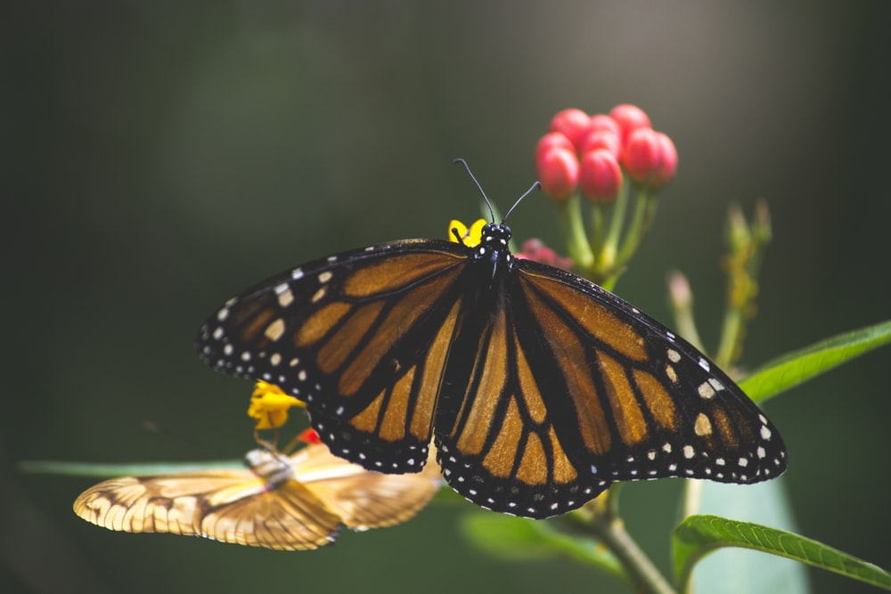 brown and black butterfly perched on flower