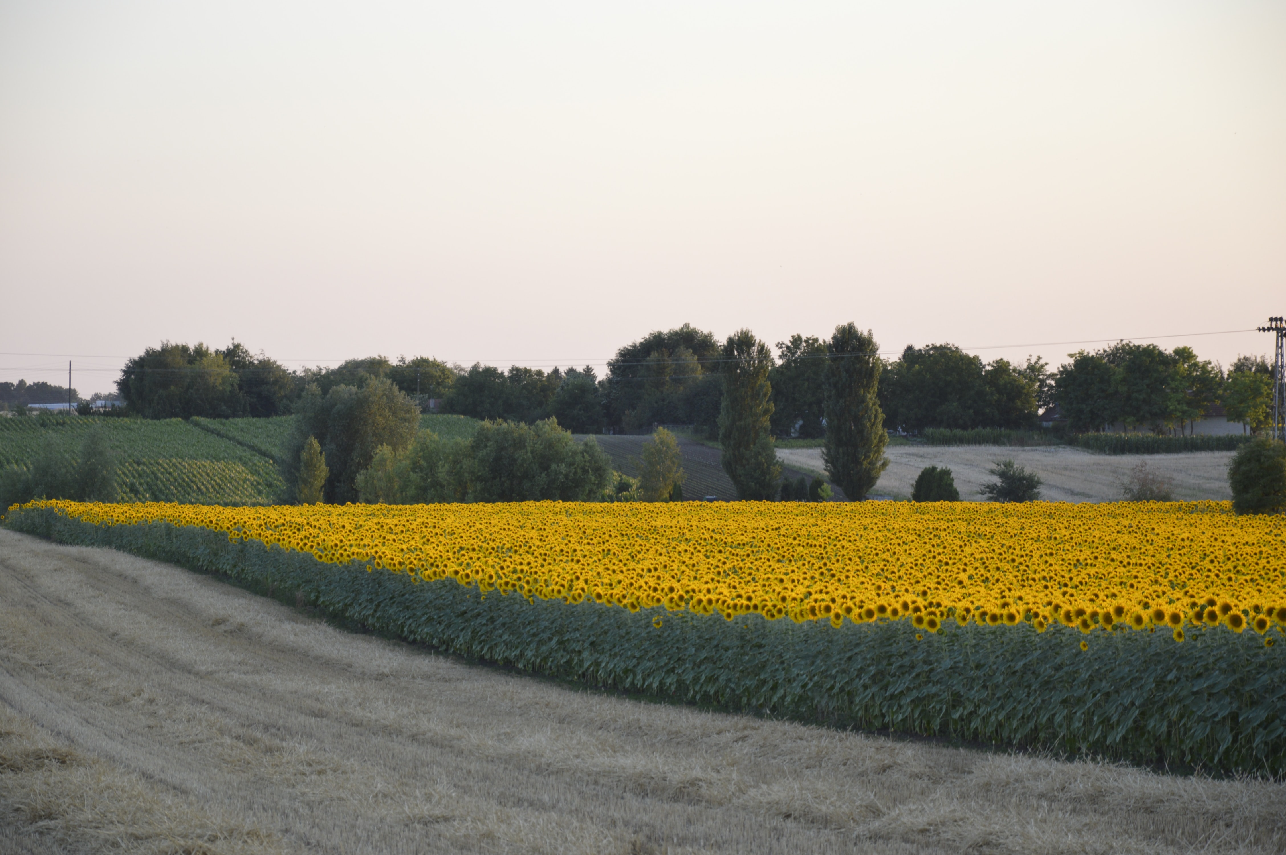 landscape photography of yellow and green shower field
