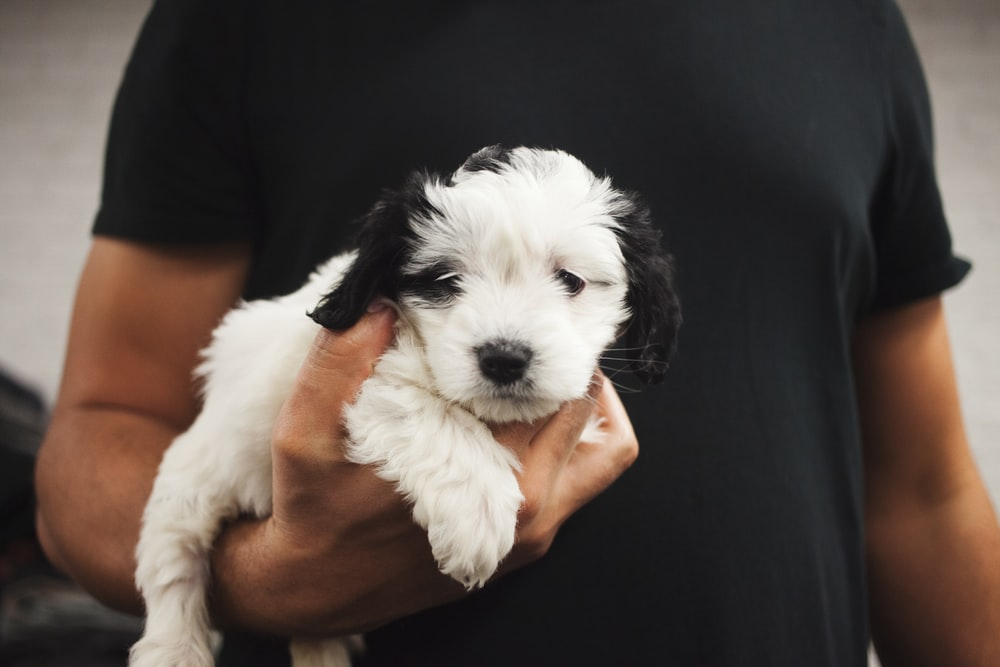 person carrying white and black puppy