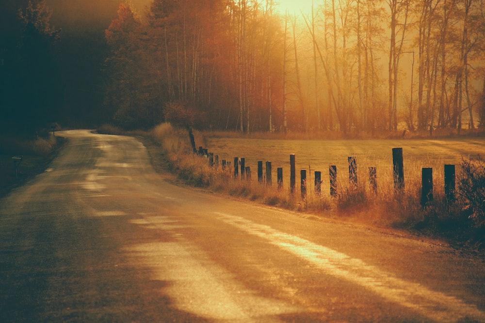gray asphalt road in between trees during golden hour