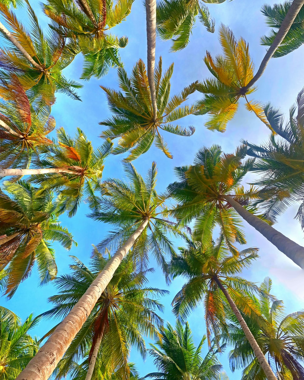 low angle of coconut trees under blue sky