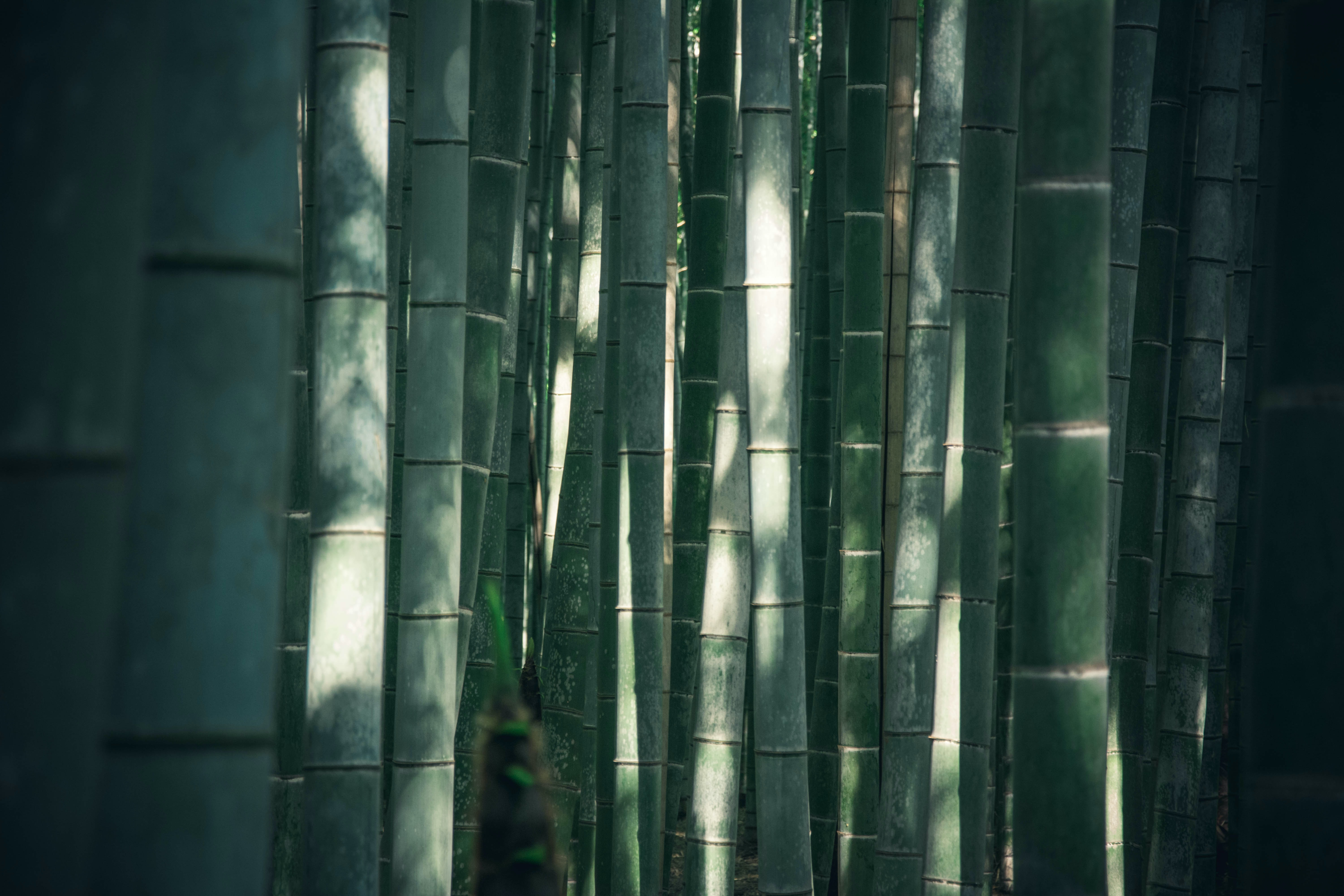 closeup photo of green bamboos