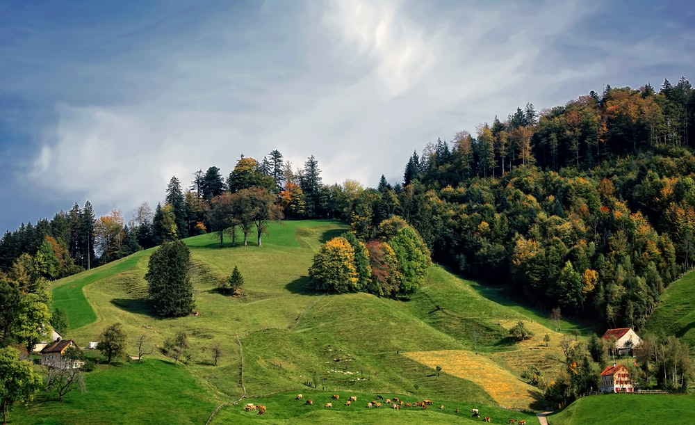 landscape photography of houses near the hill with trees