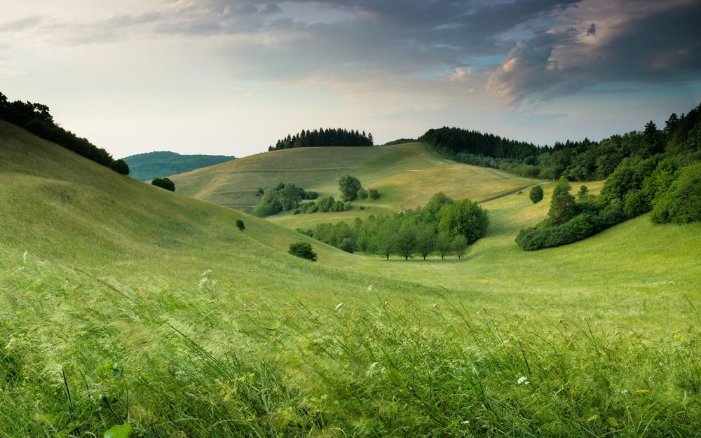 green hills with forest under cloudy sky during daytime