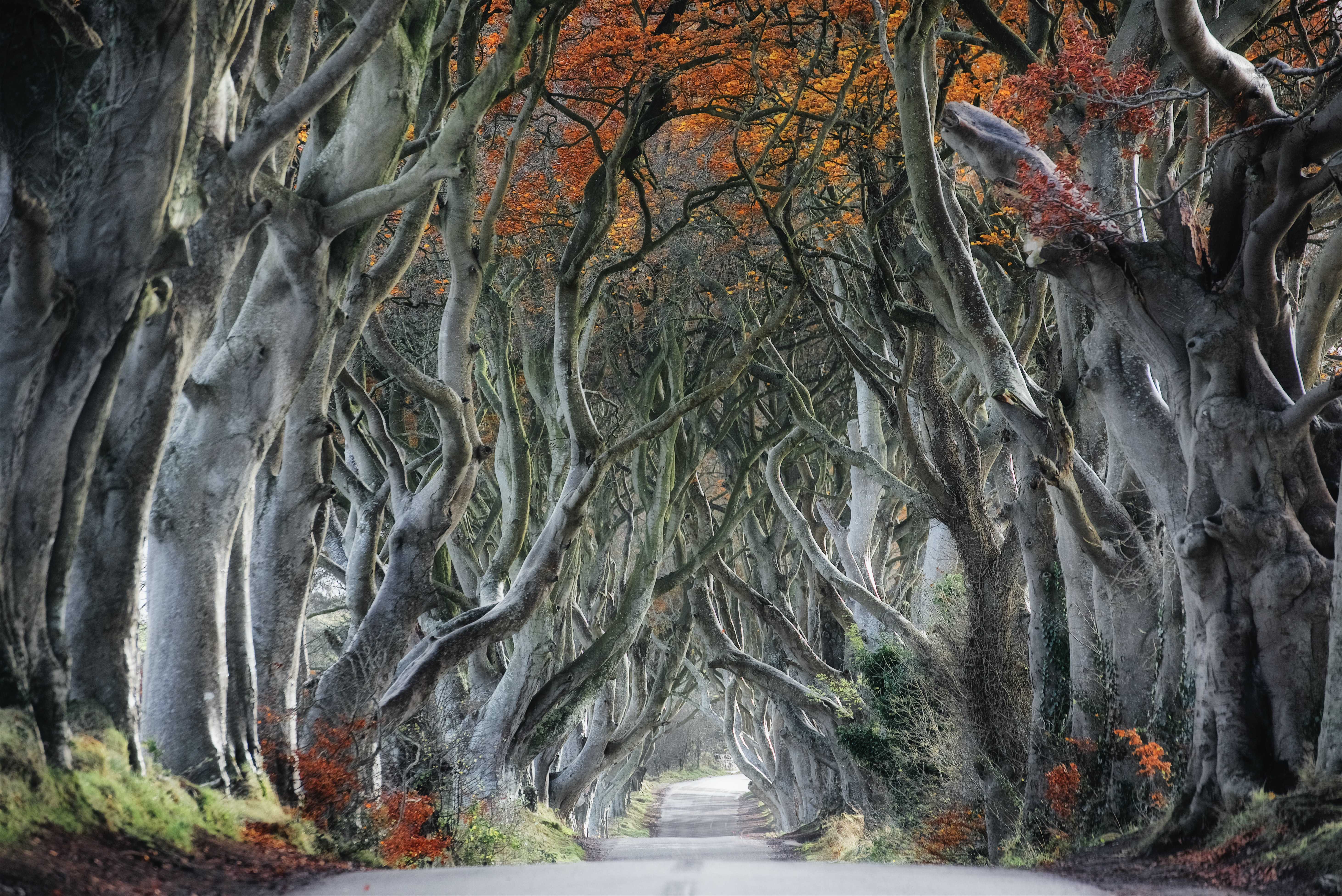 painting of gray tree branches