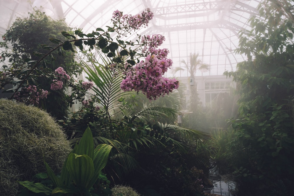 pink flower plant with mists surrounded by green plants