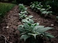 anti-soil