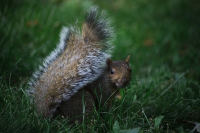 shallow focus photography of squirrel muted zoom background