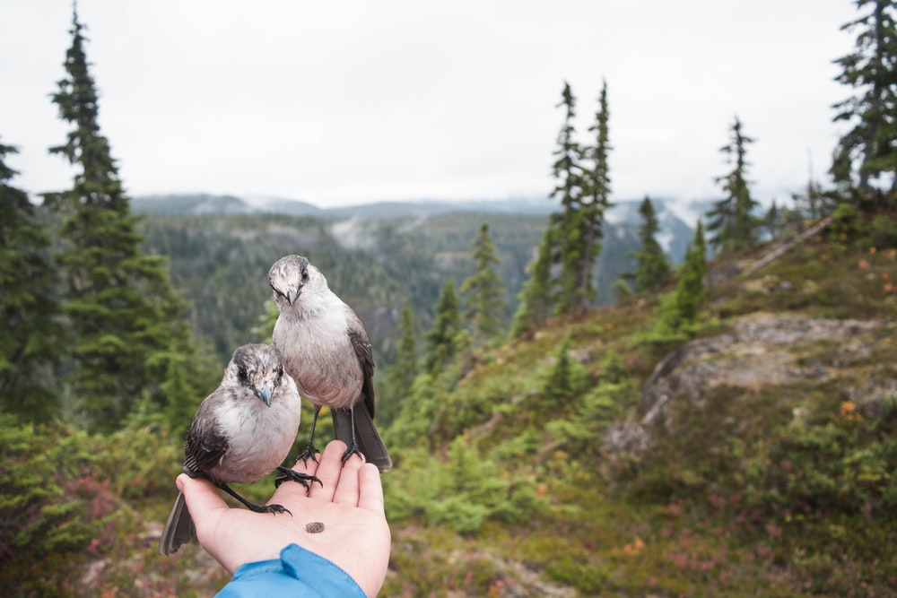 person holding two gray birds during daytime