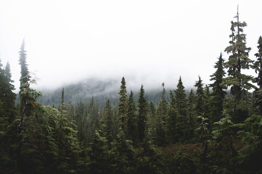 forest in mountains under cloudy sky during daytime