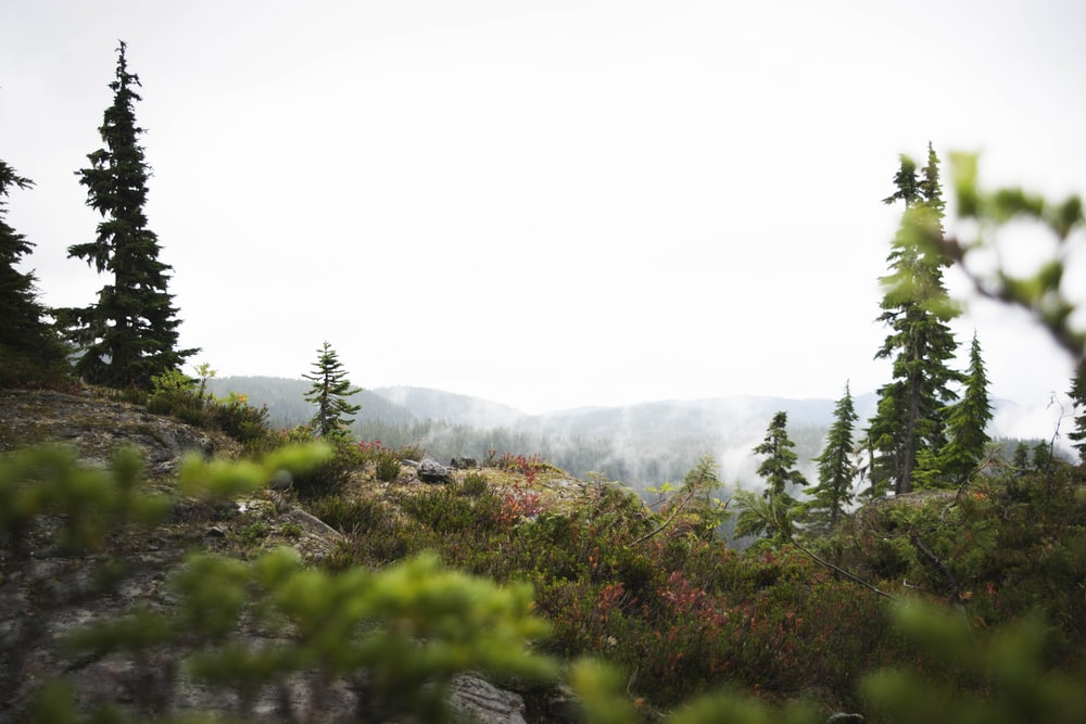 tilt shift photography of trees on hill at daytime