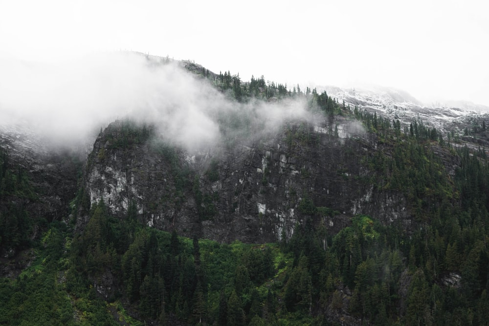 photo of mountain covered with fog and trees