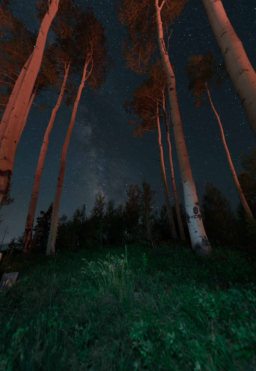 landscape photography of trees