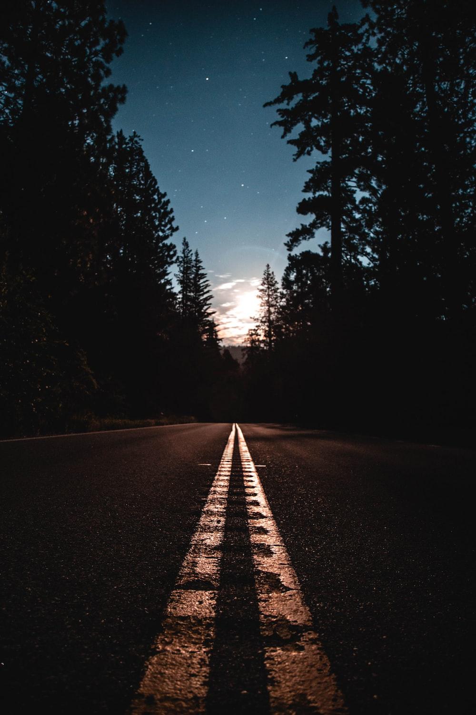 asphalt road between pine trees