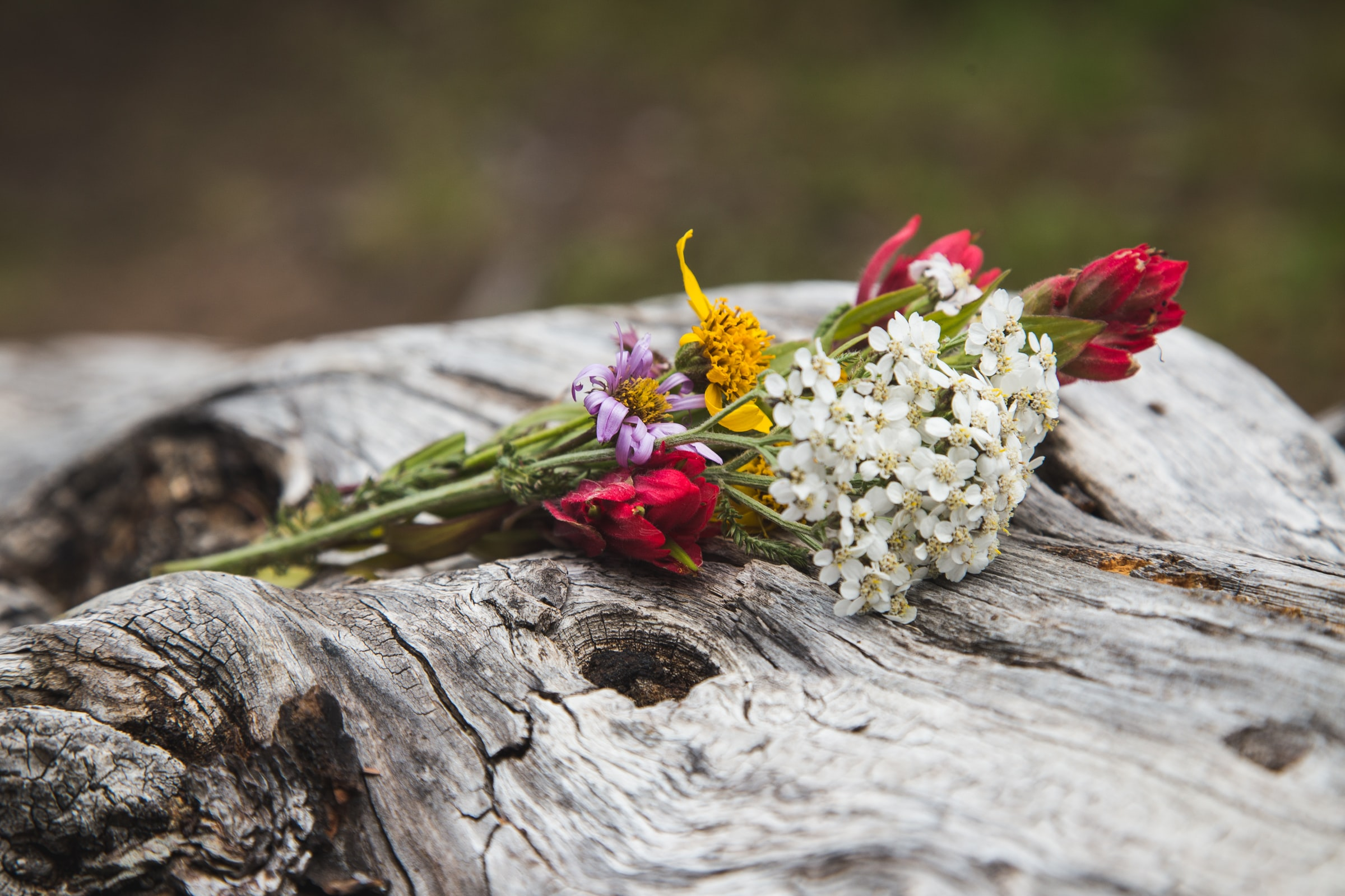 white and pink petaled flowers on wood log