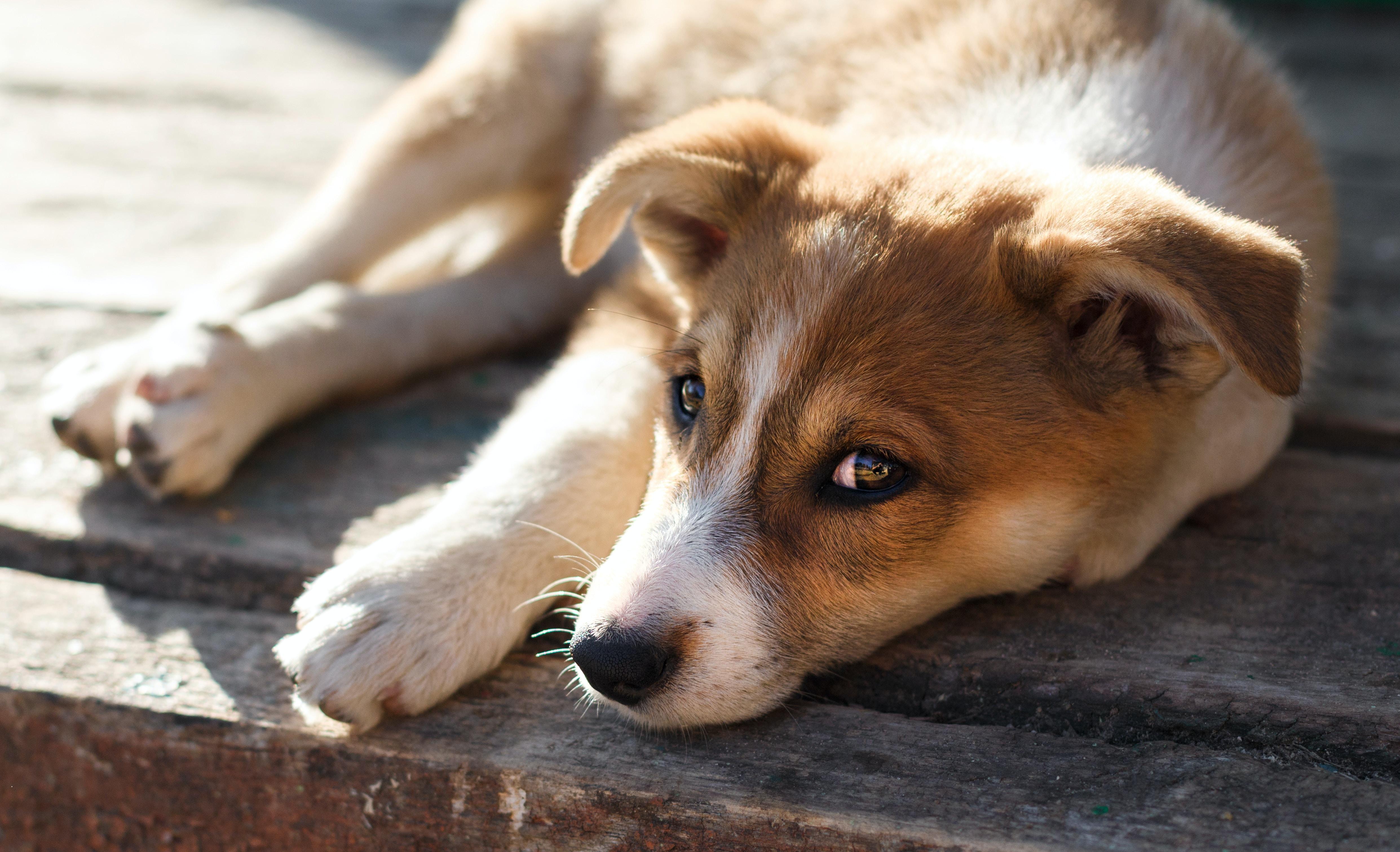 pet dog laying on brown surface