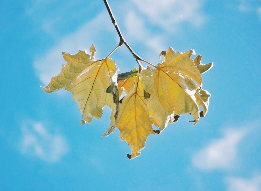 beige leaves under sunny blue sky