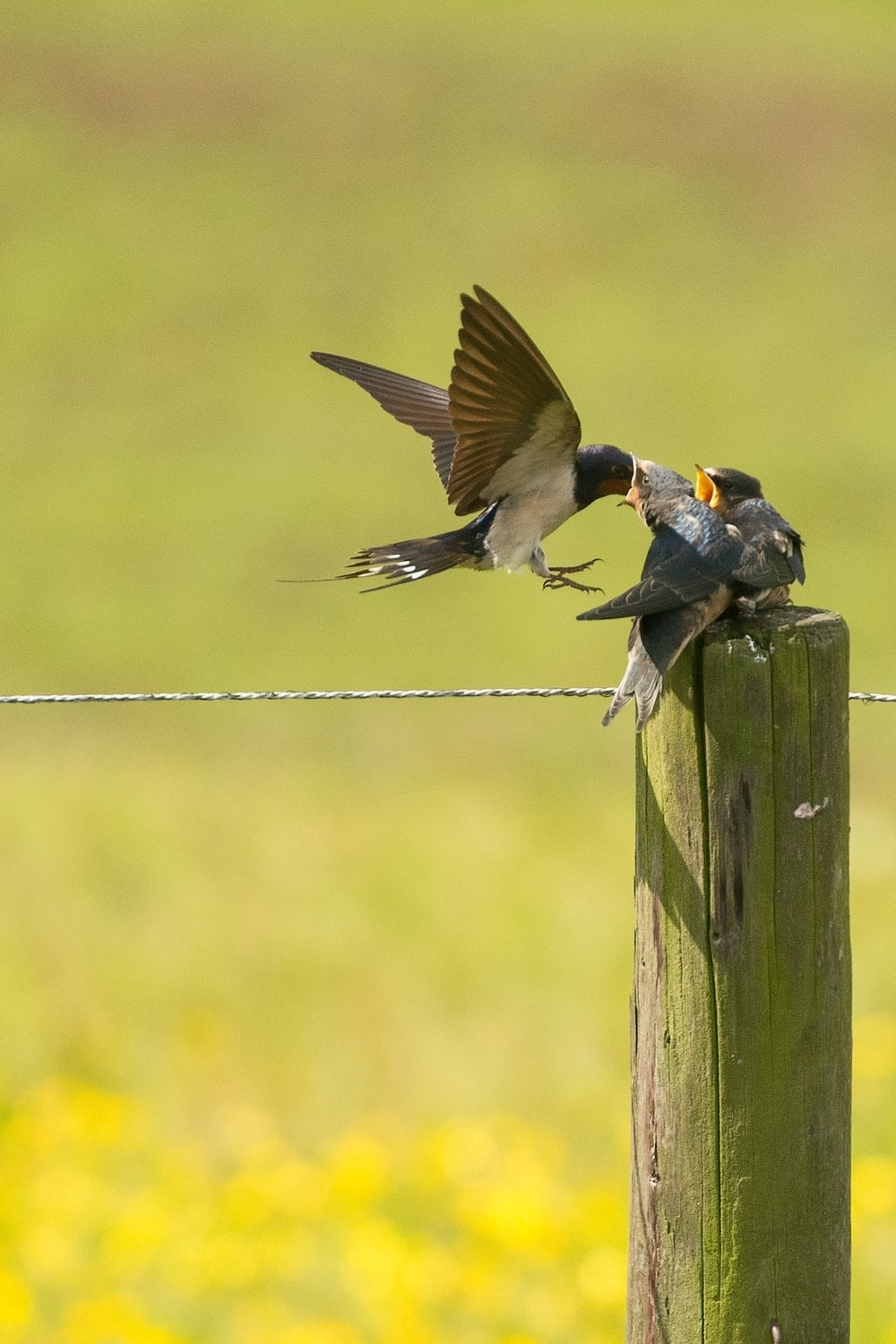 shallow focus photography of bird feeding two bird chicks