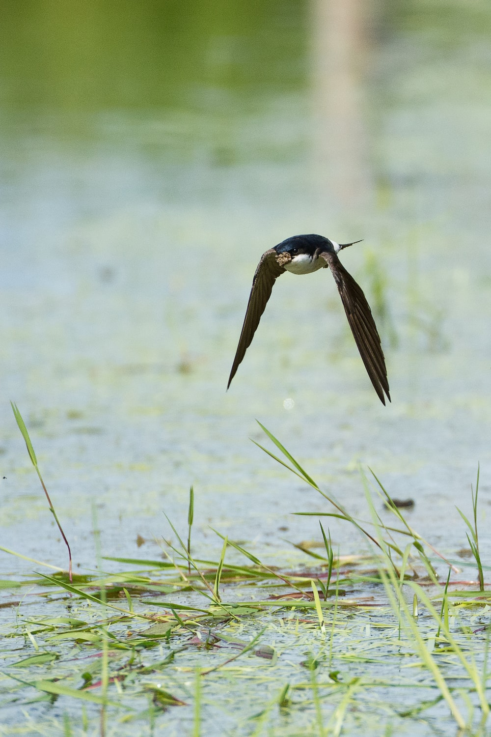 black bird flying above water in selective focus photography
