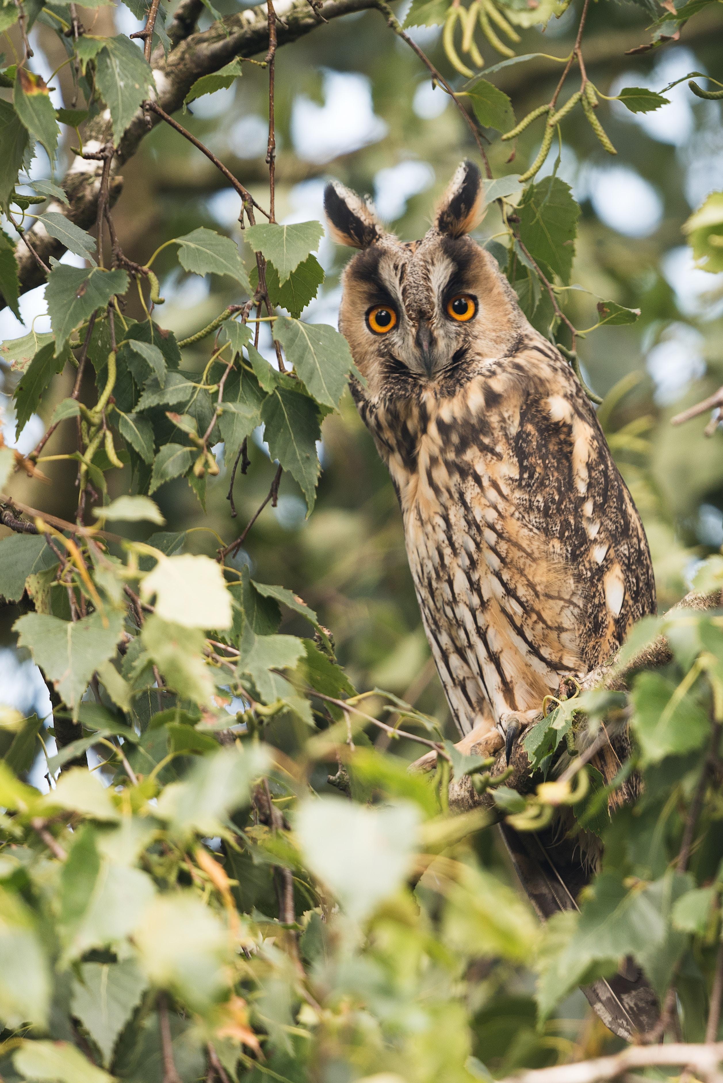 owl on leafed trees