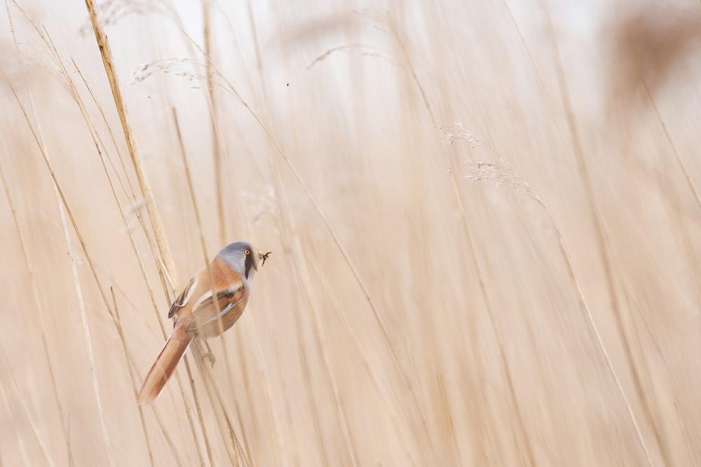 photo of brown and gray short-beak bird