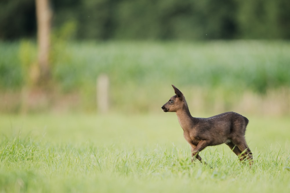 photo of brown deer on grass field