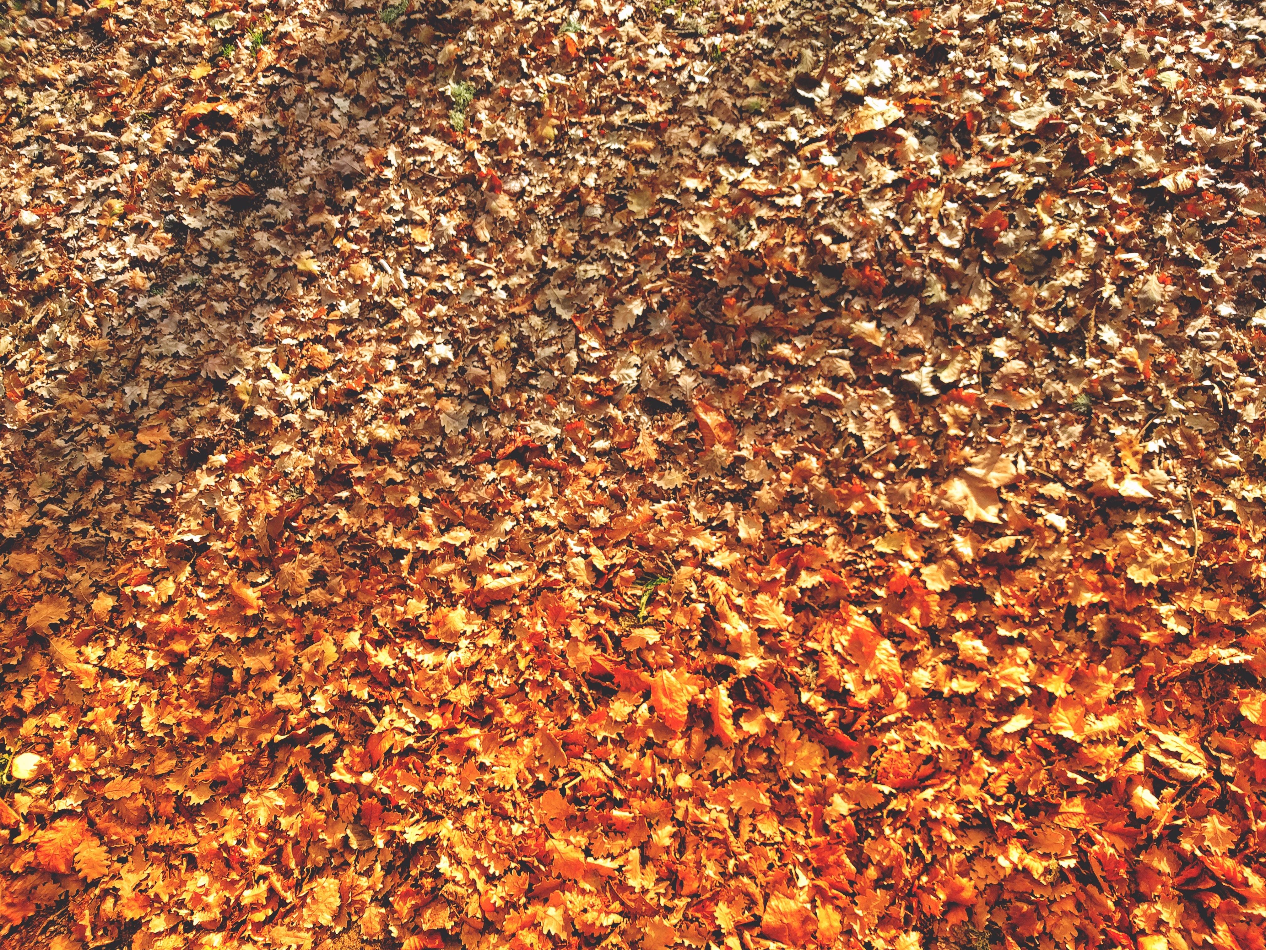 brown dried leaves field