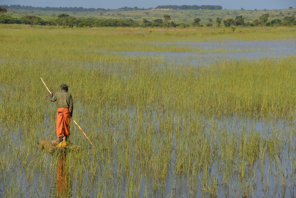 man walking in rice field across green trees
