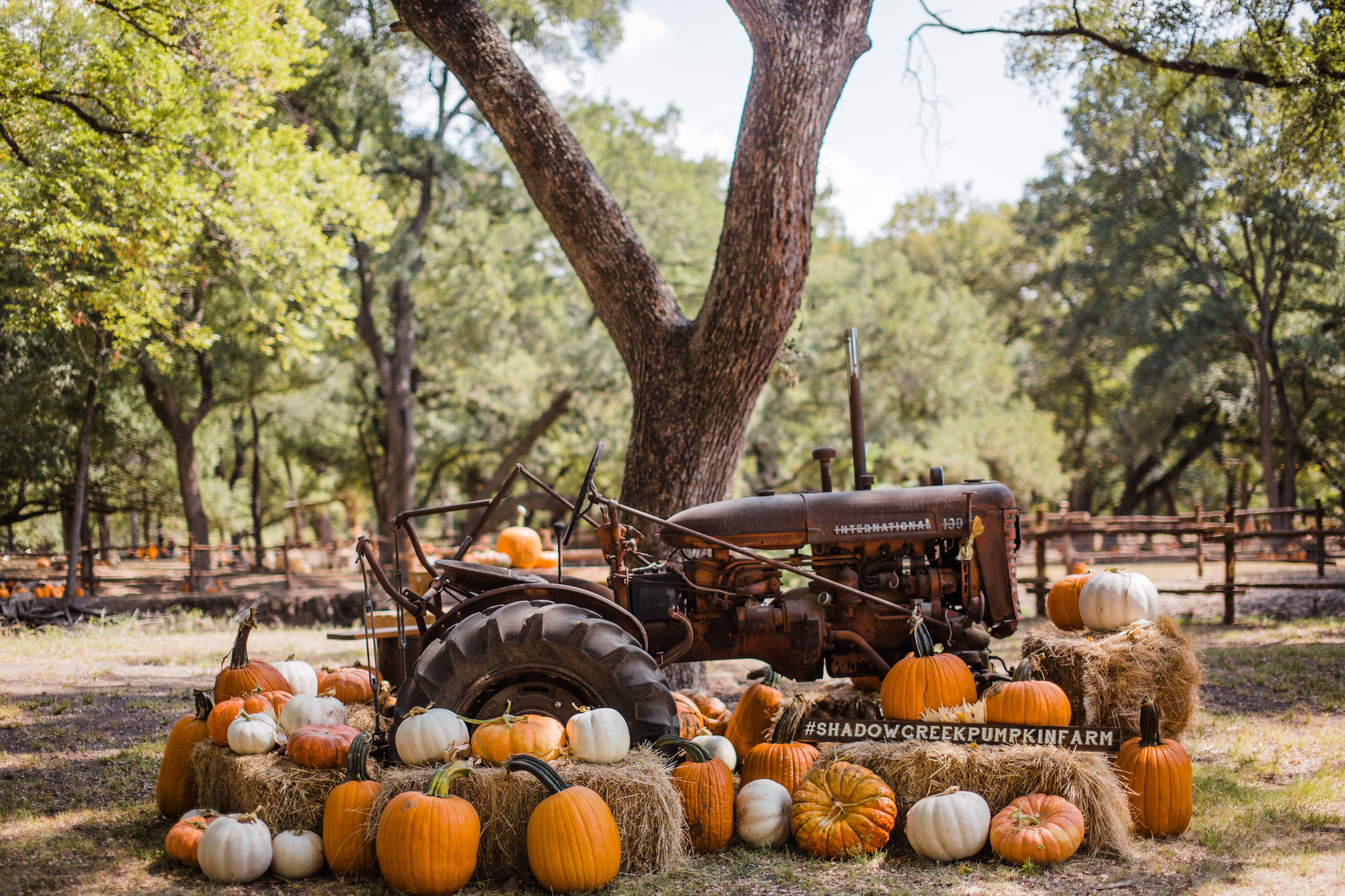 brown tractor surrounded with pumpkins