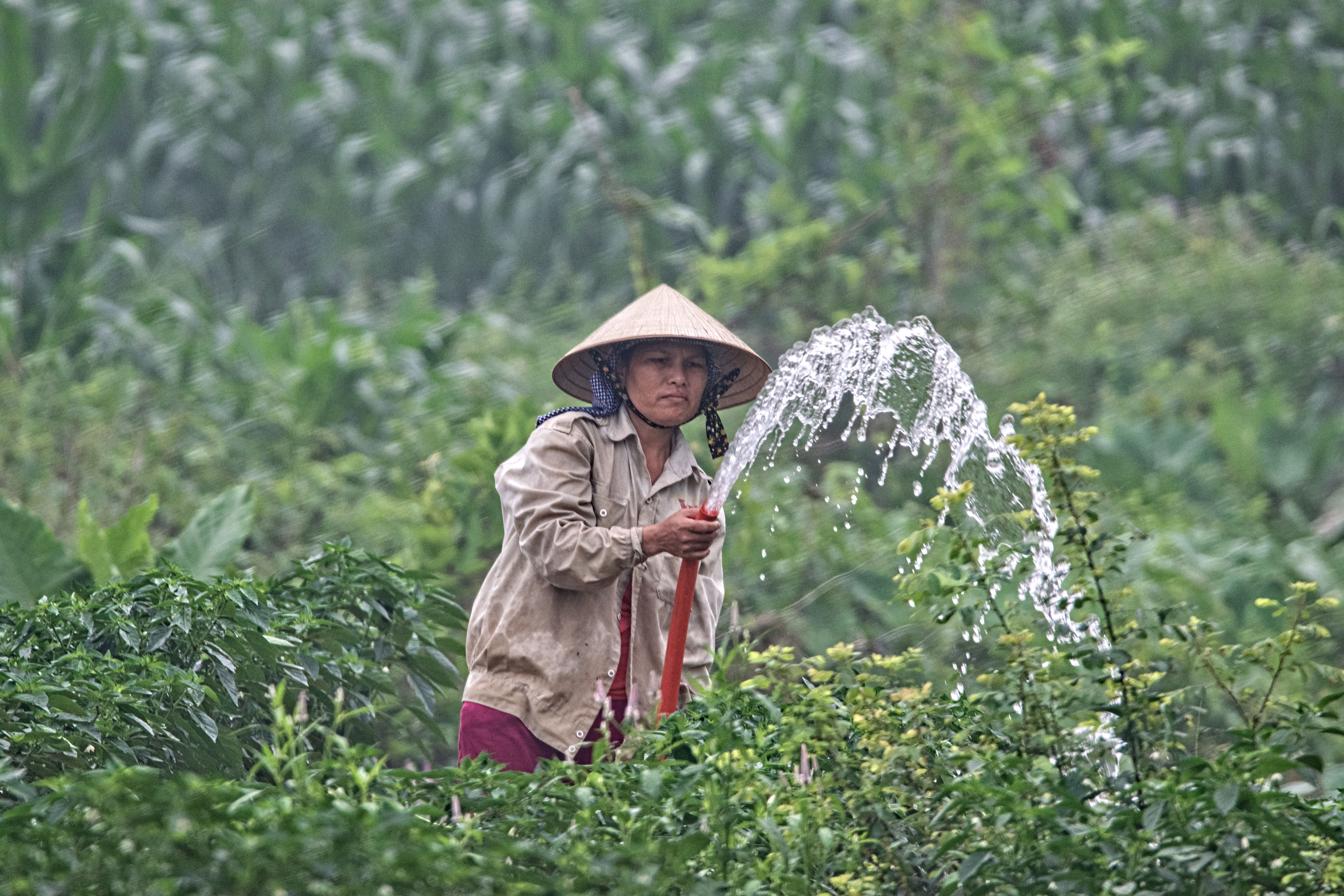 woman watering plants during daytime