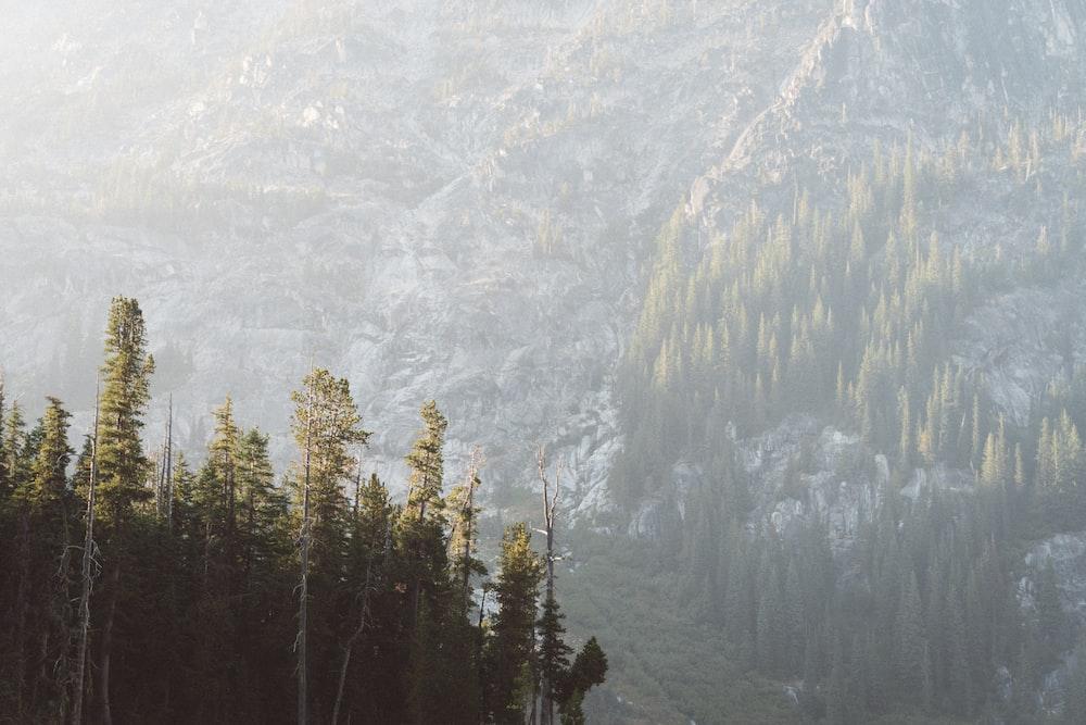 tall trees within mountain range during daytime