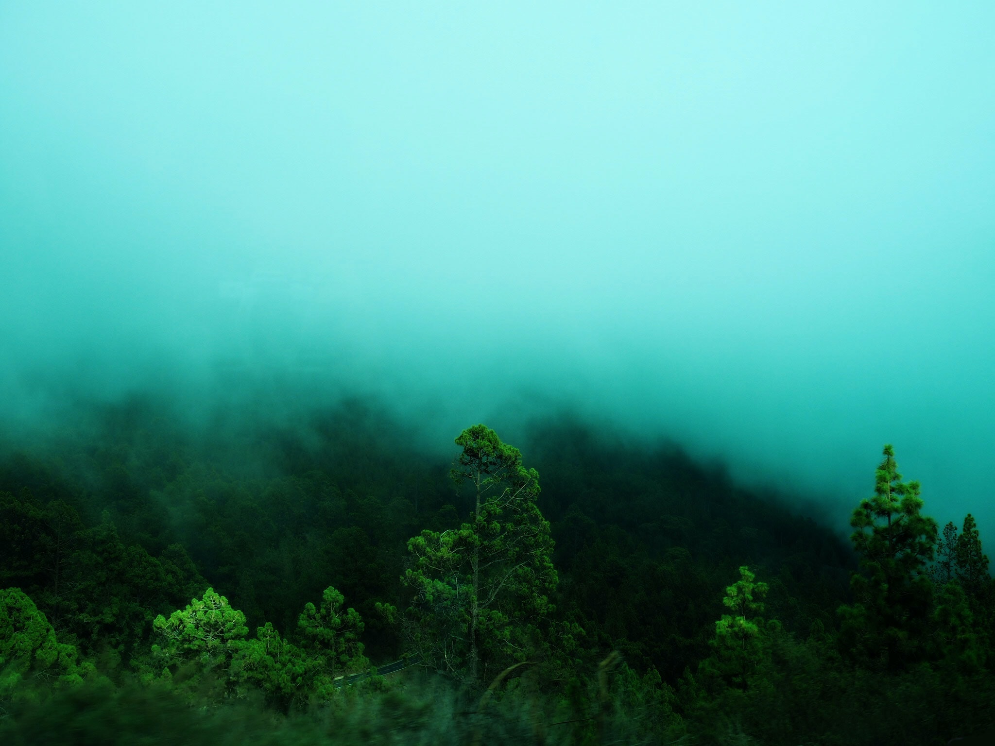 green leafed trees surrounded by fog