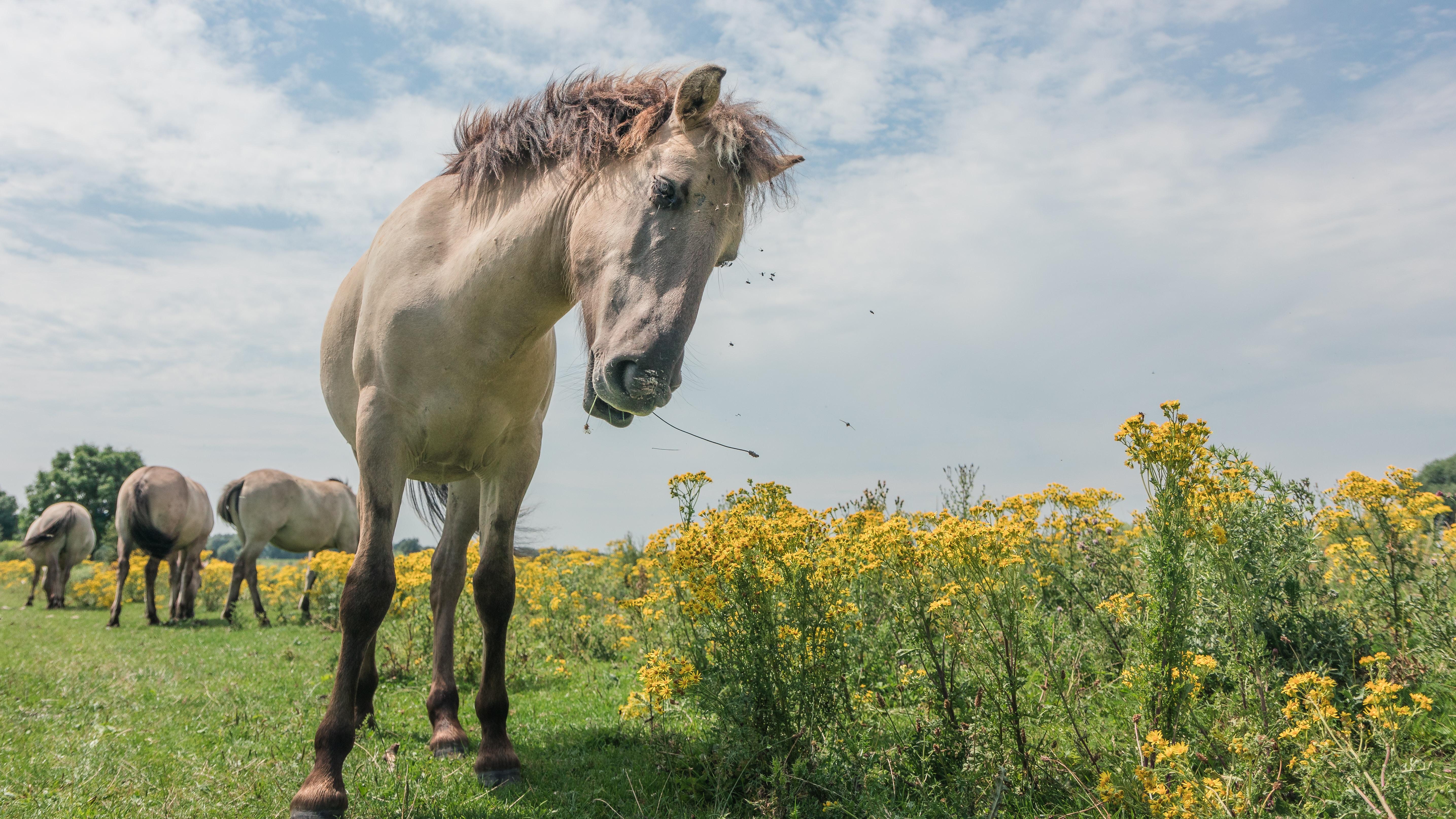 gray horse standing beside yellow flowers
