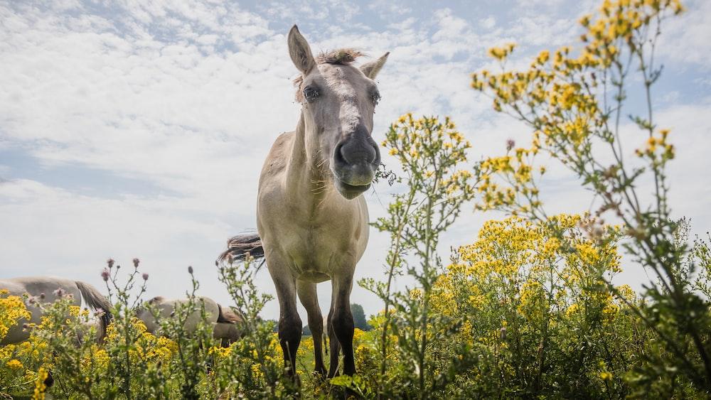 white horse in flower field at daytime