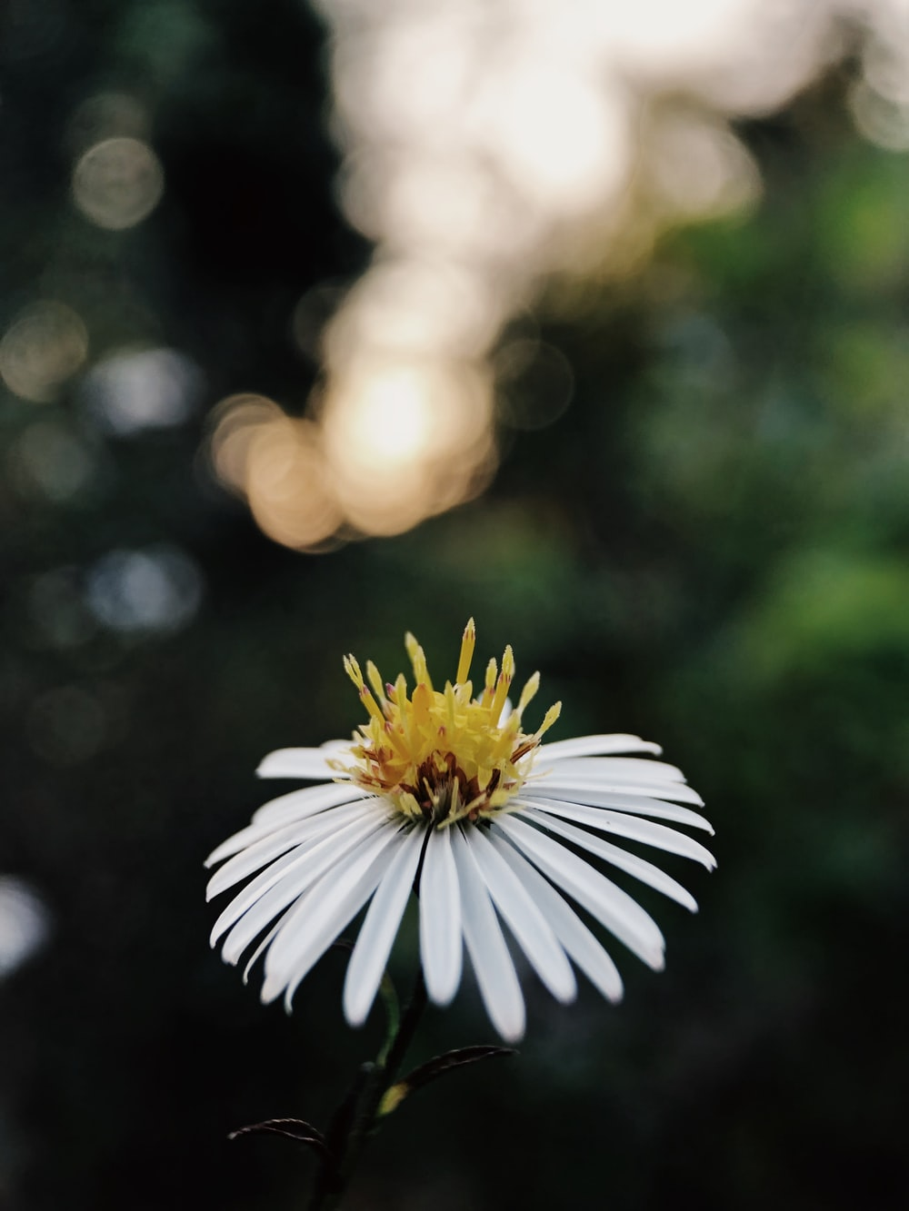 White Petals Pictures Download Free Images On Unsplash