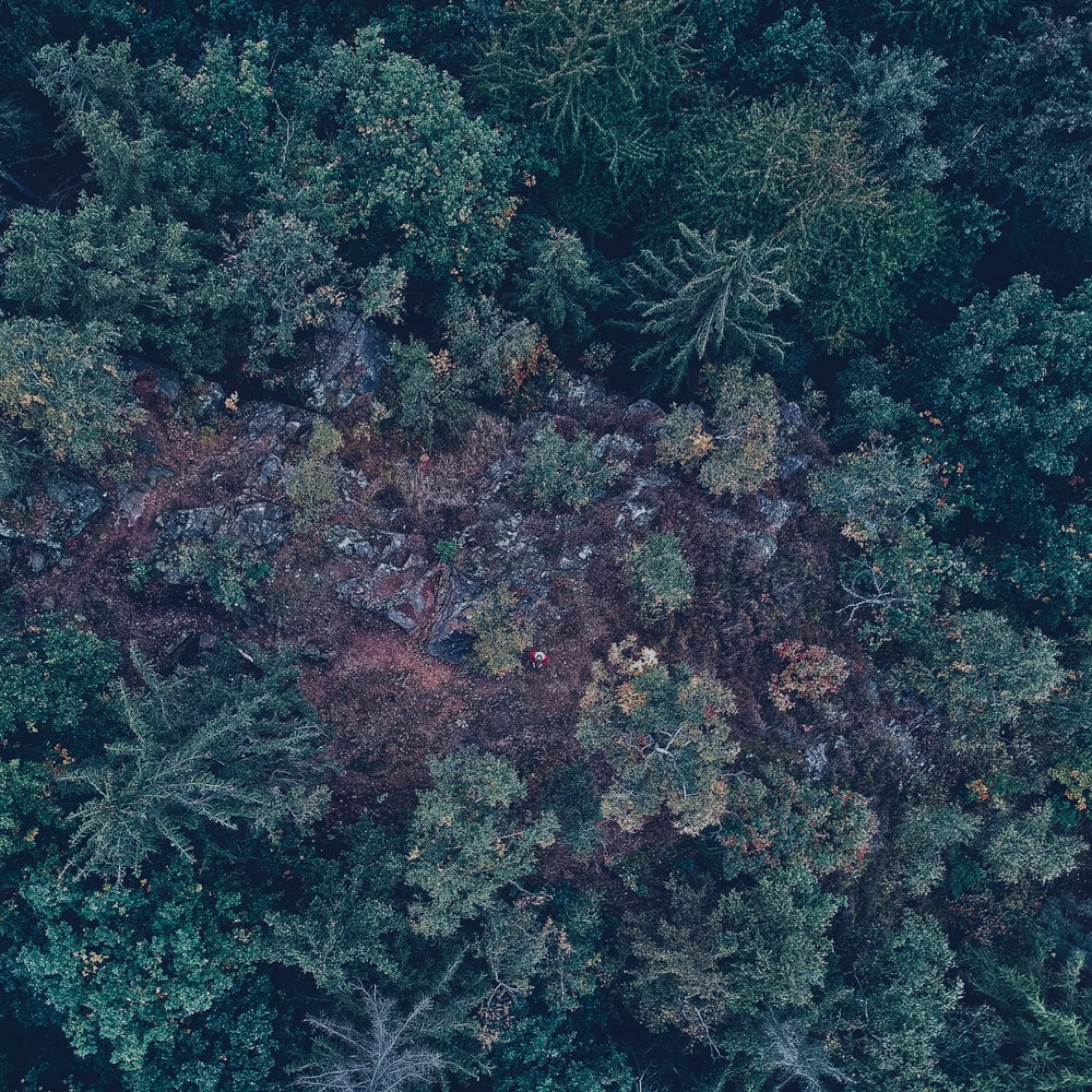 aerial photo of green leafed trees at daytime