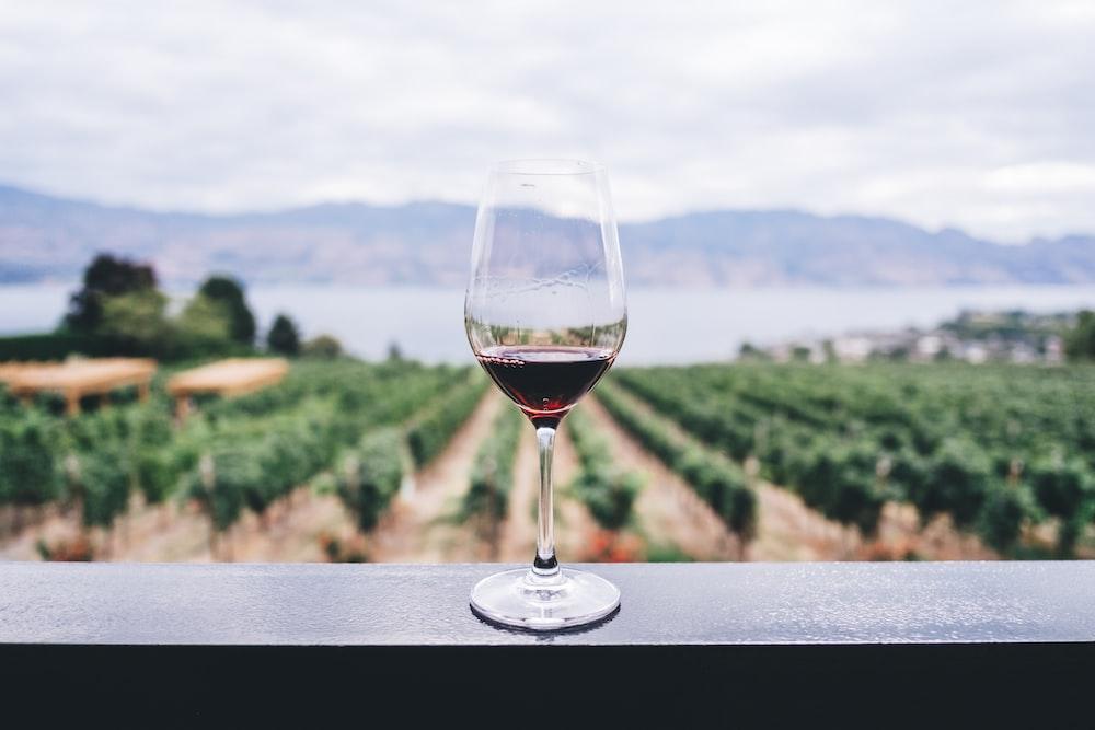 clear wine glass overlooking orchard during daytime degustazione vino milano