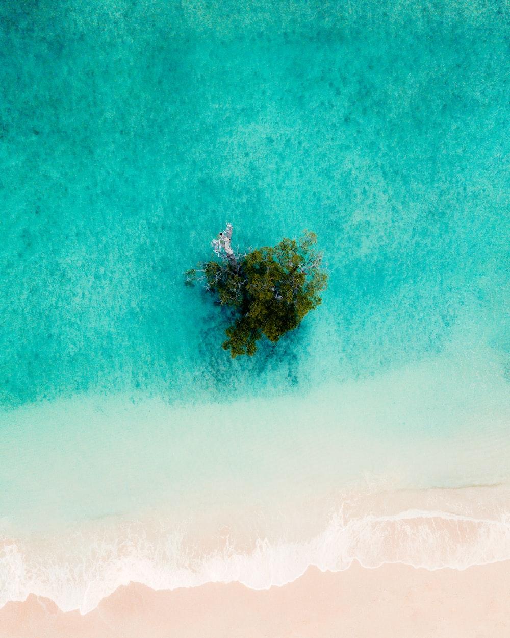 bird eye photography of island beside body of water