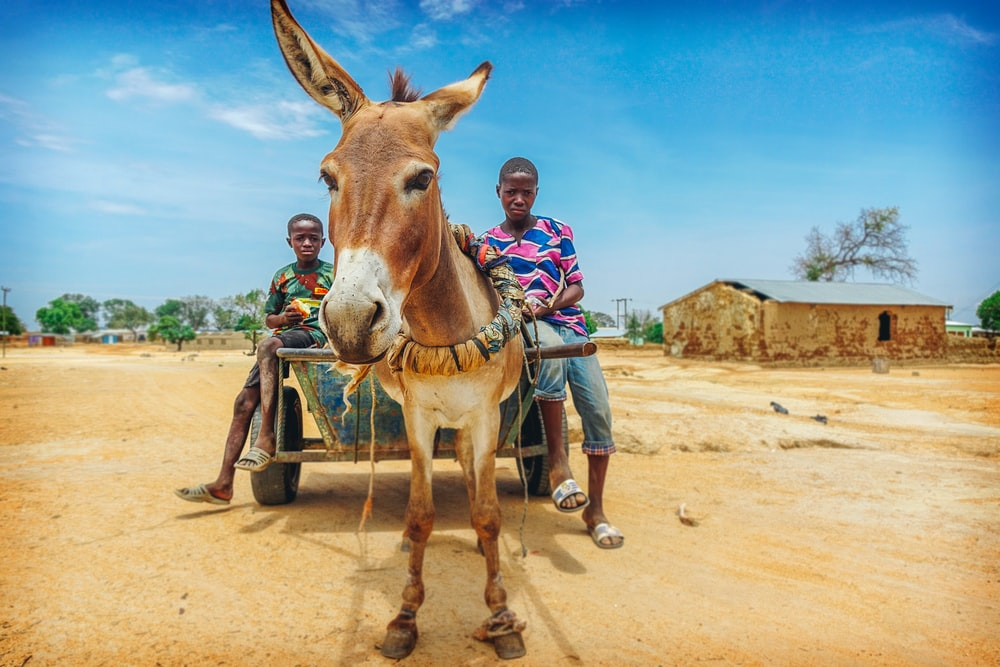 people riding on wagon with donkey