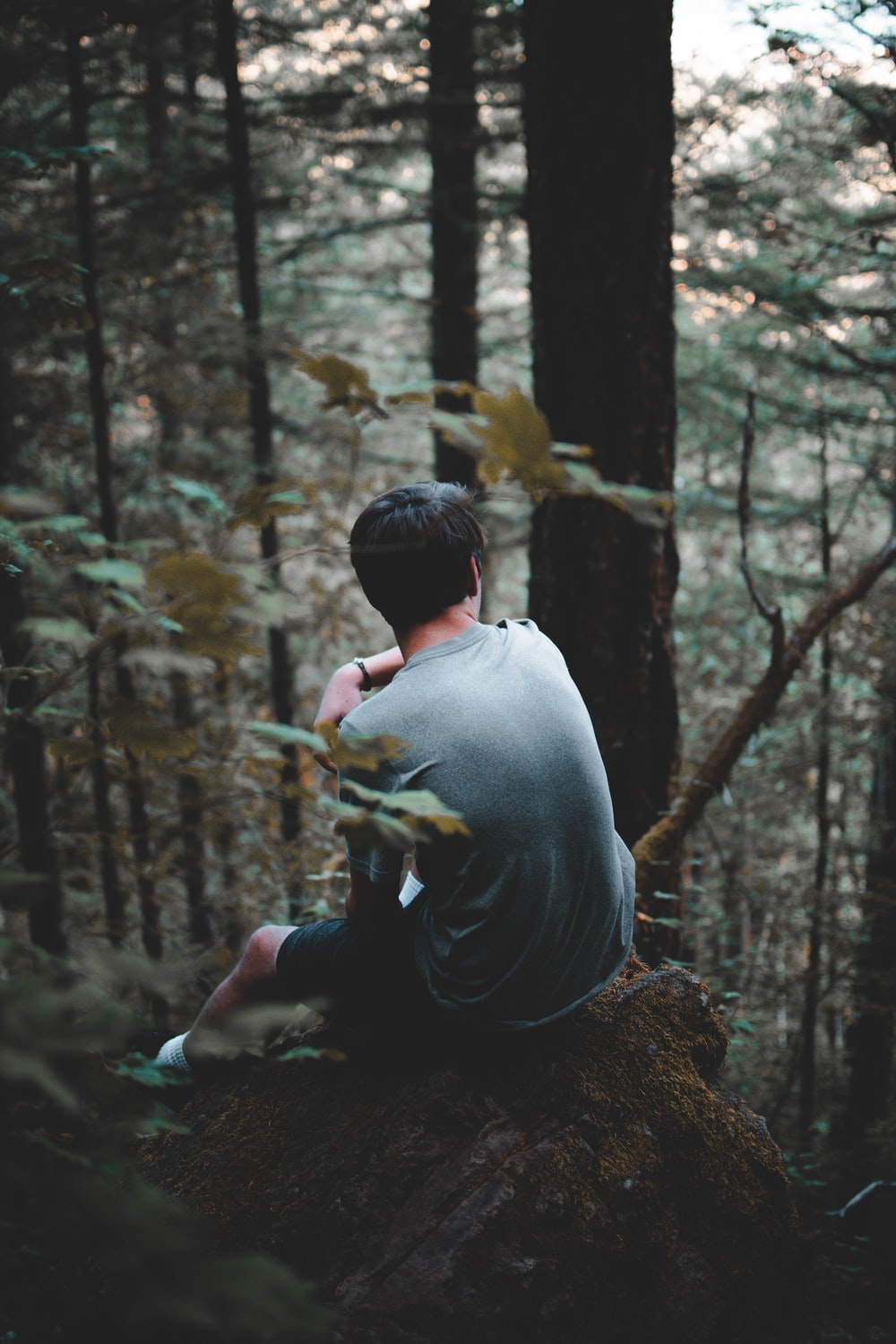 man sitting on top of hill forest