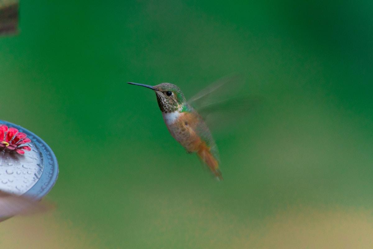 鳥 高速 羽ばたき