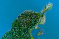 aerial photography of green trees on island