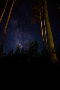 low angle photo of white tree trunks with nightsky
