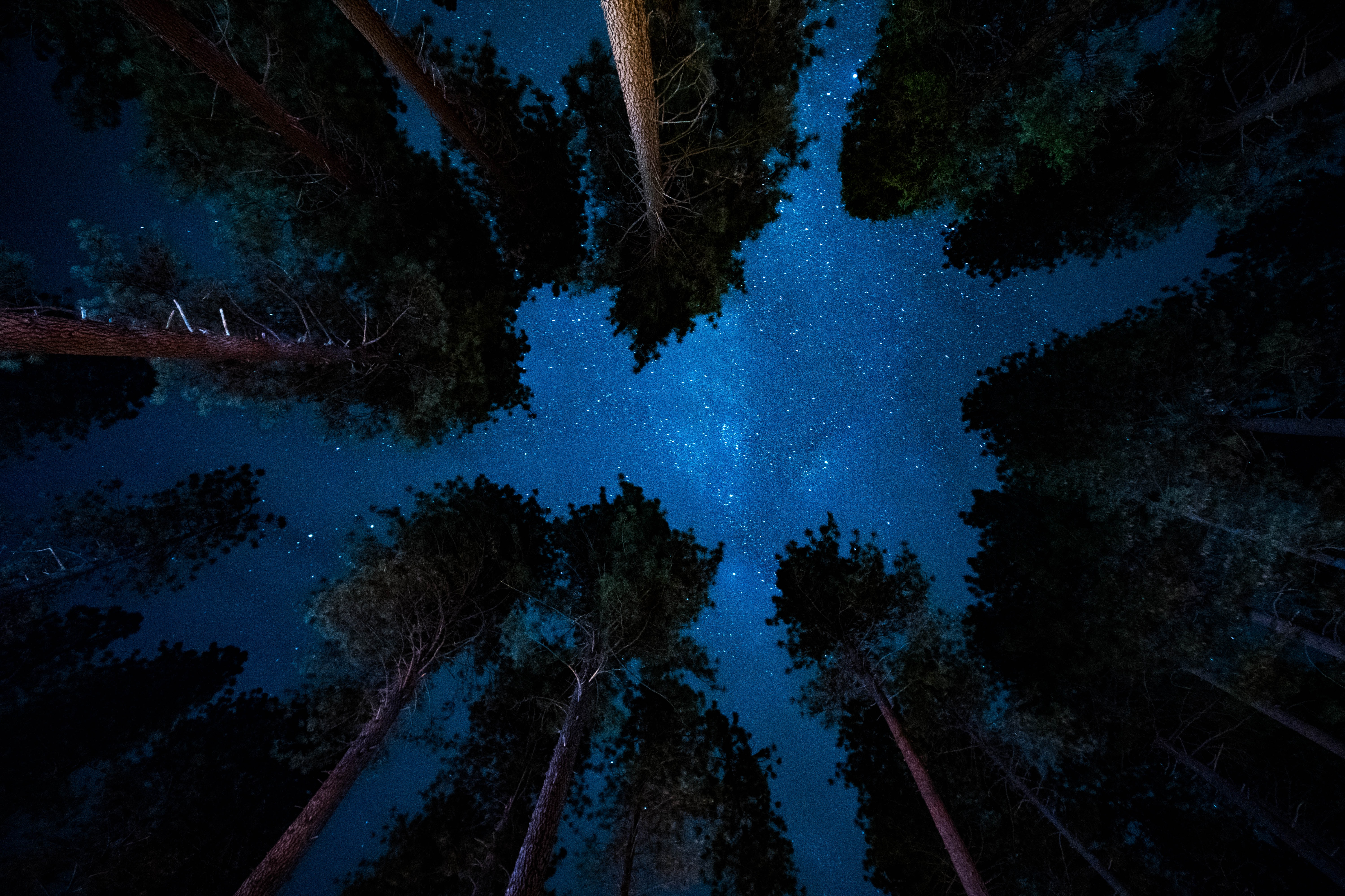 low angle photography of trees
