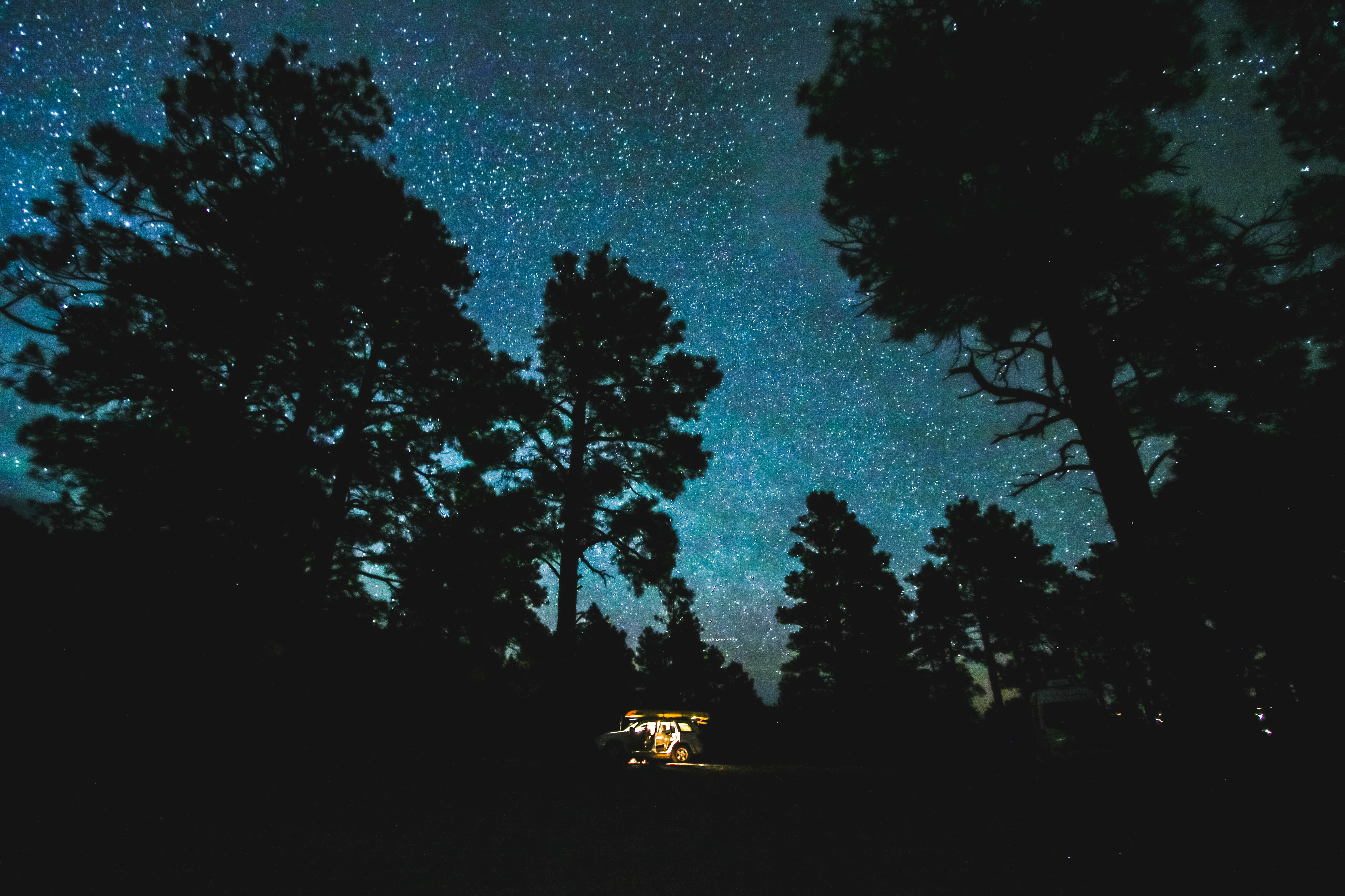 low angle photo of forest under clear sky during nighttime